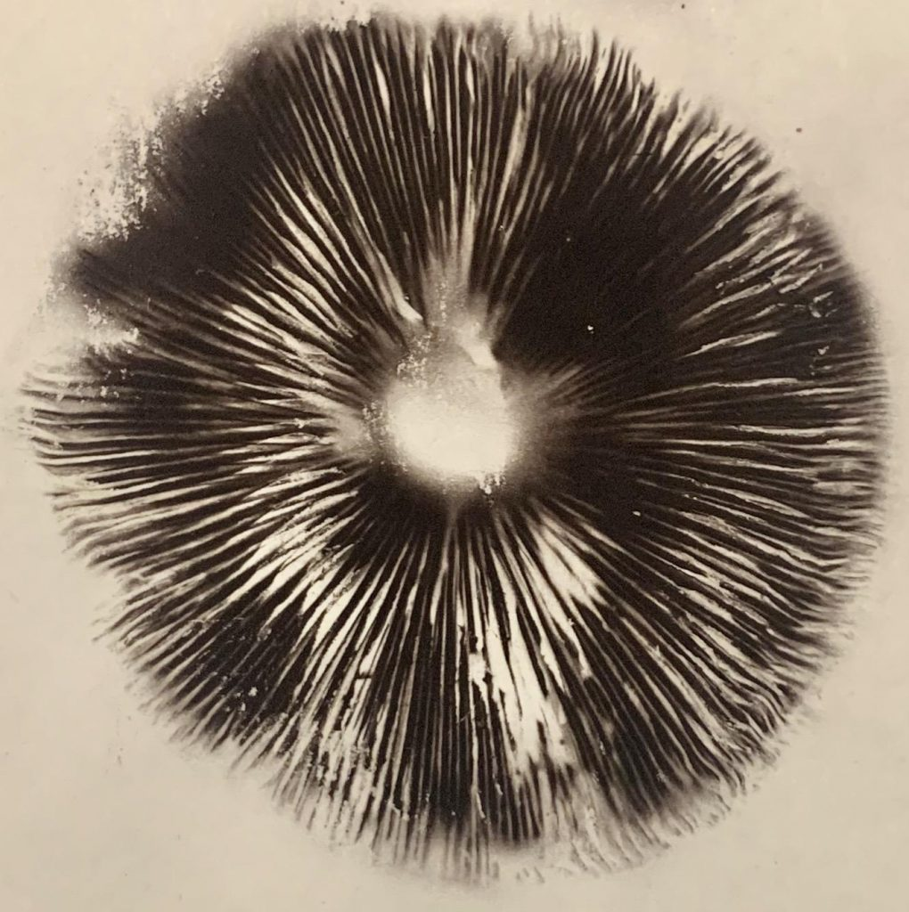 Spore prints are important identifiers